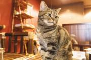 【思わず触りたくなる】動物に癒されるカフェデート3選