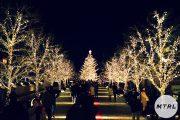 デートで行きたい!東京都内で開催予定のイルミネーション2019