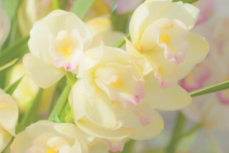 【女子が喜ぶプレゼント】誕生花別!彼女との記念日や誕生日に贈りたい花言葉